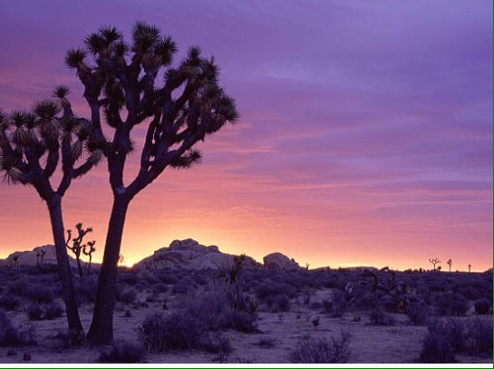 The Hidden Magic in Joshua Tree