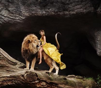 lion-3403595_960_720